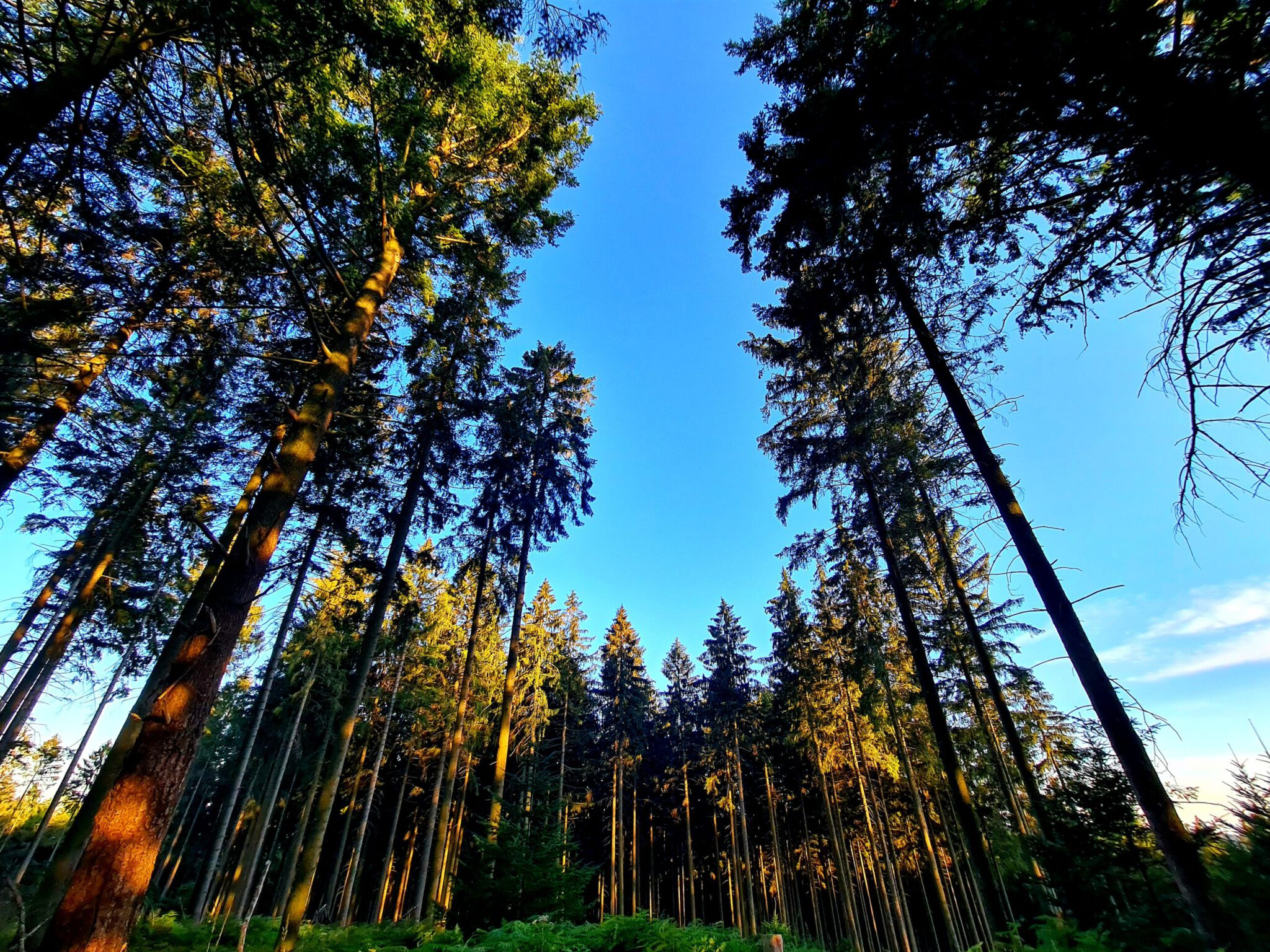 Grünenplaner Forst