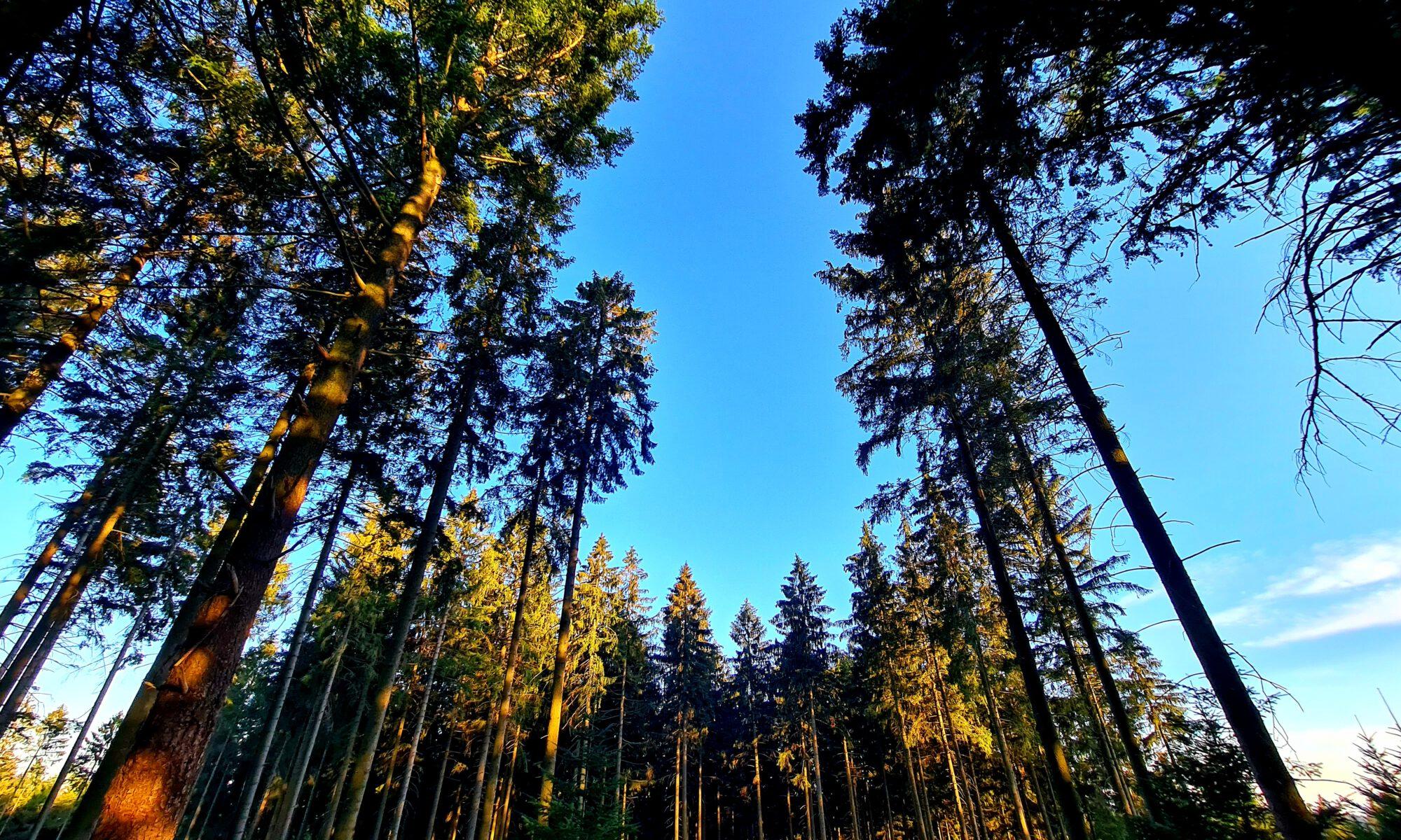 Im Grünenplaner Forst