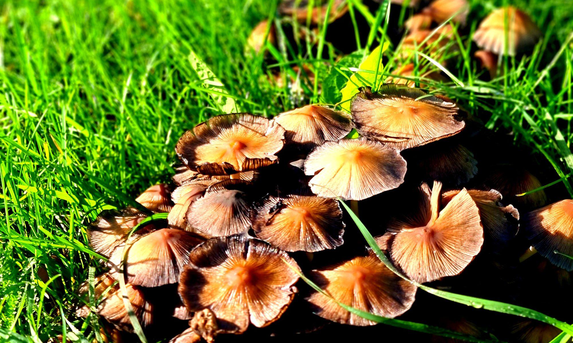 Pilze am Straßenrand